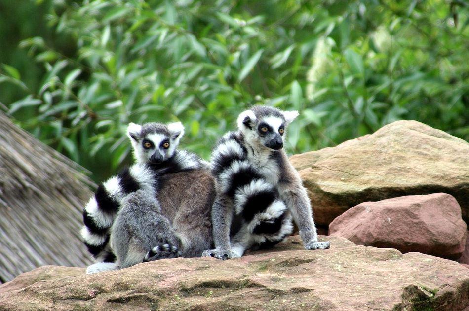 zoo bâle mulhouse